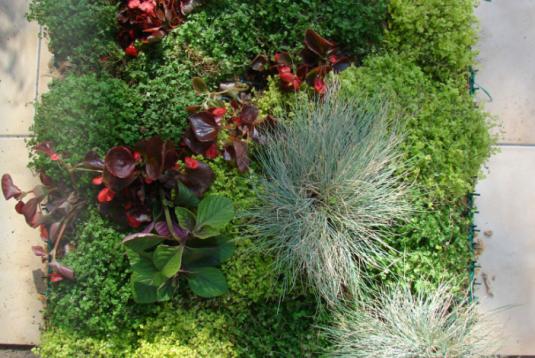 Productos jardines verticales for Caracteristicas de los jardines verticales